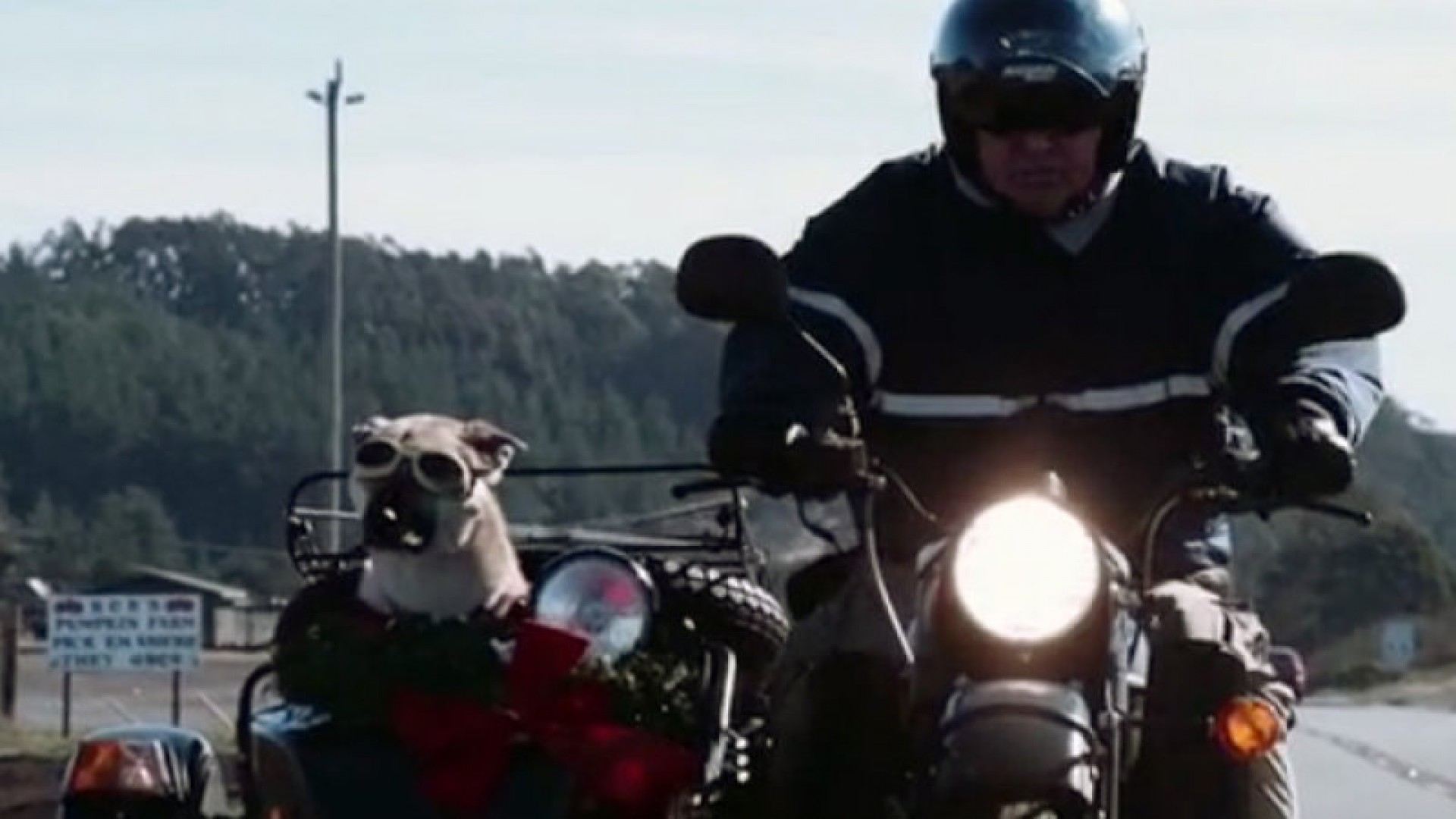 Sit, Stay, Ride: The Story of America's Sidecar Dogs