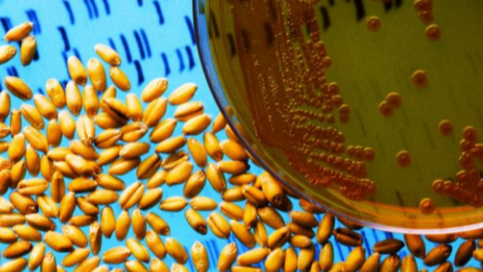 """""""CELLULAR AGRICULTURE - FUTURE OF FOOD"""""""
